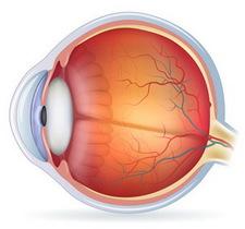 rezveratrol-szem-szürkehályog-megelőzése