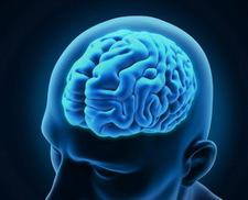 agy védelme kognitív funkciók, fekete áfonya, kapszula
