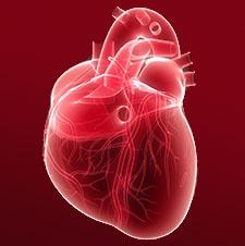 galagonya szív koszorúérhálózat kapszula tabletta
